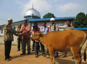 SRL Serahkan bantuan hewan kurban 1434 H di Long Beleh Haloq