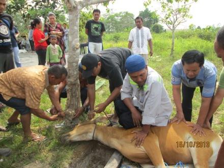 Karyawan SRL Potong Sapi Kurban di Camp Rig