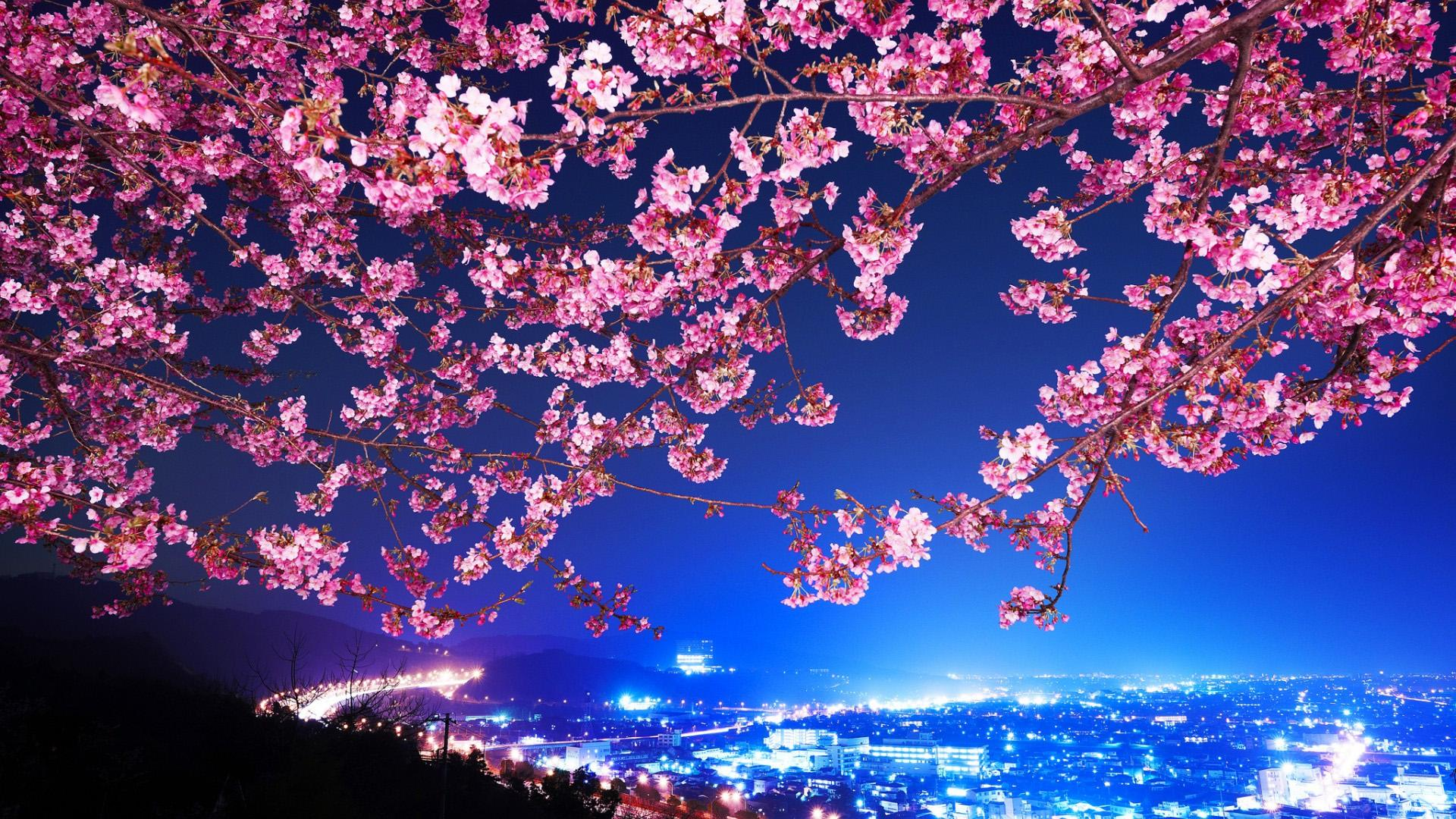 Inilah Jalan Terang Menuju Negeri Bunga Sakura