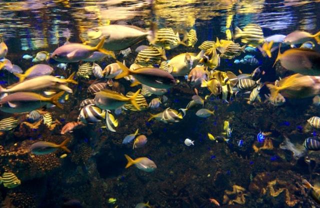 Beraneka Jenis Ikan di Osaka Aquarium KAIYUKAN