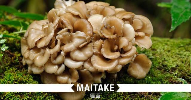 012-3-maitake